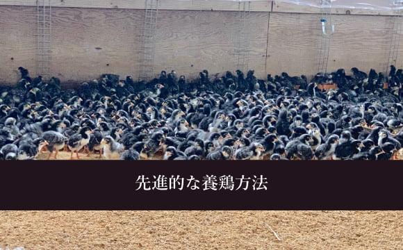 先進的な養鶏方法